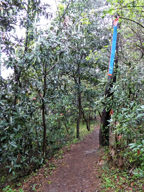 Blue and orange ribbons mark the path