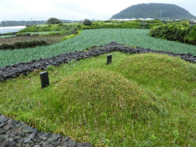 There are thousands of traditional Jeju burial mouns, in the middle of fields of crops
