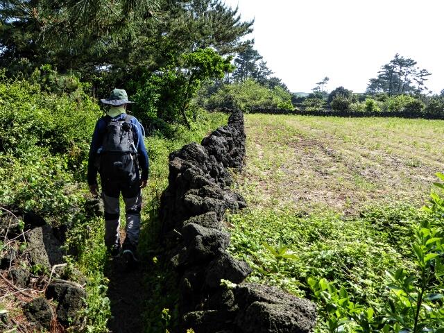 Path between stone walls through gardens