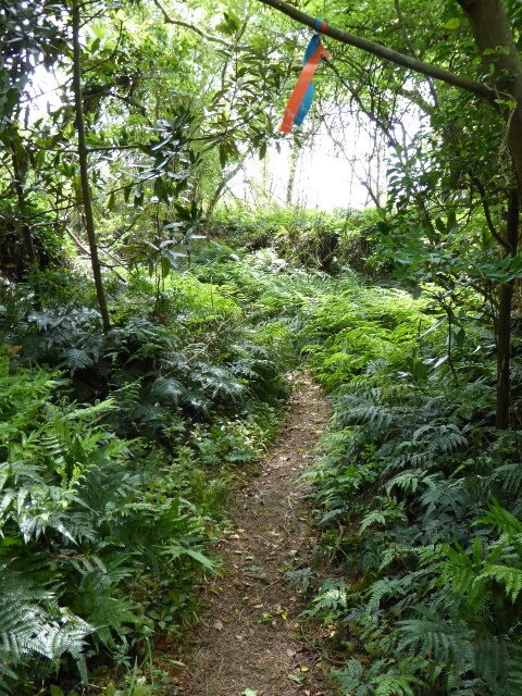 Bracken on both sides of the path - loved as a food by Koreans