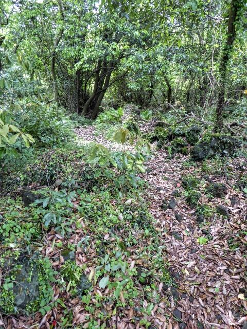 Entering Gotjawal (forest)