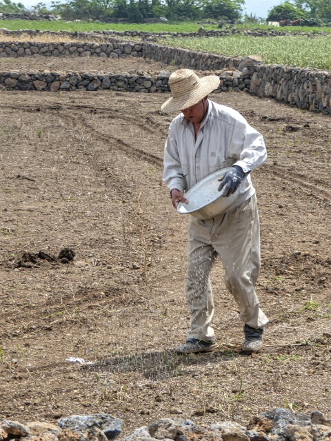 Farmer spreading fertilizer