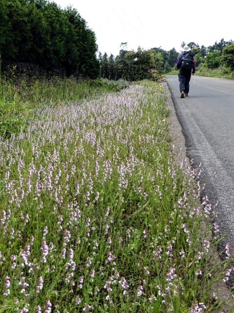 Wildflowers growing along the road