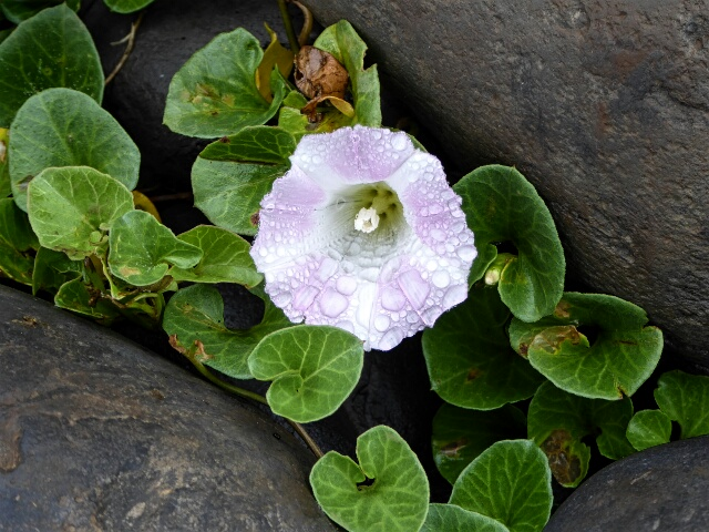 Flower growing in the rocks