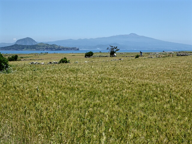 Barley fields, Mt Hallasan - Korea's highest peak, in the background
