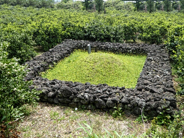 A grave in a tangerine orchard