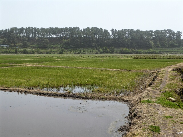 The path through Hanon volcanic crater, the largest in Asia, used to grow rice