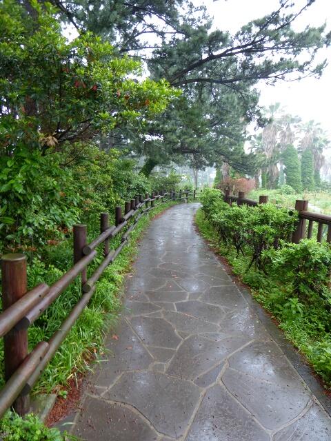 Not rain, heavy wet mist as we leave Seogwipo