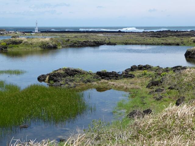 Salt marshes near the start of Route 4