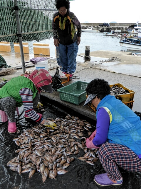 Women sorting the catch