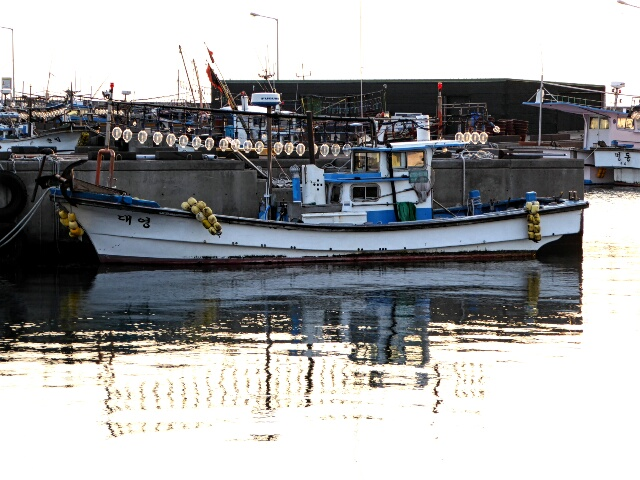 Squid boat returns from a night's fishing - bright lights attract the squid