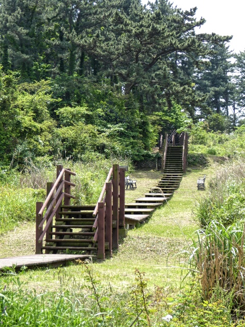 Steps leading up into the pine forest