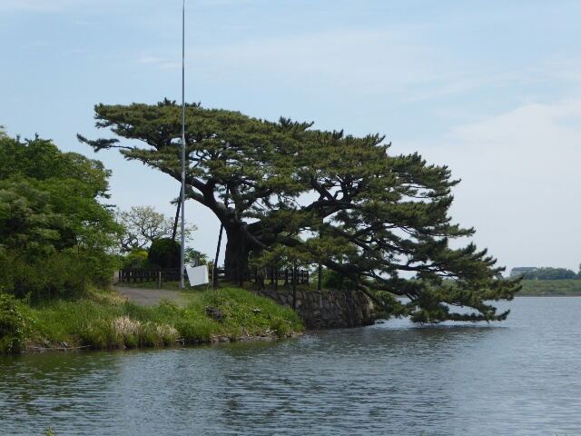 Attractive tree growing over a lake