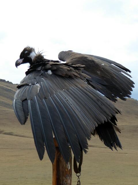 Birds of prey are used for hunting
