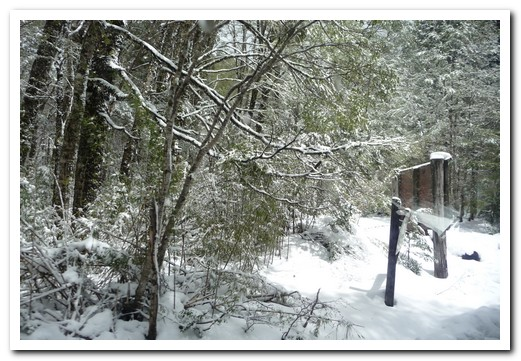 Snow in the rainforest at the Argentine/Chile border (at about 900m)