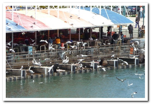 The fish market at Valdivia