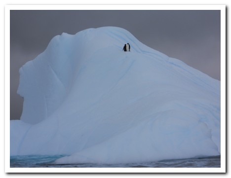 Two lone Adaile Penguins on an iceberg