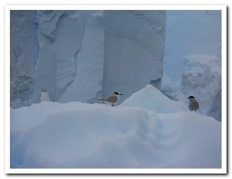 Birds resting on an iceberg