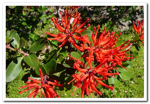 Bright red flowers cover the slopes