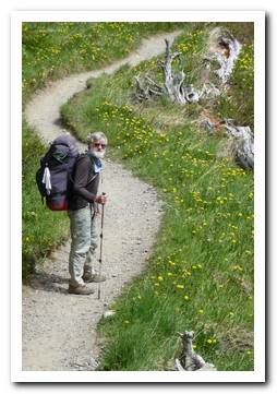 Wildflowers beside the path