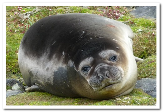 Baby seal sunning itself