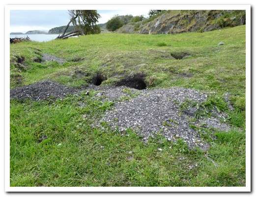 Midden of shells from the Yamana people
