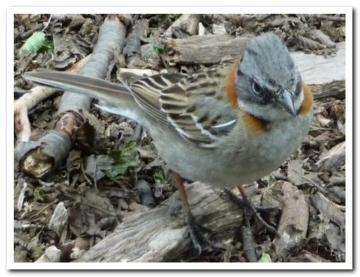 A little bird picking around the camp site