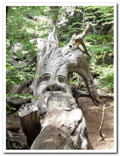 Sculptured tree in El Bosque Tallado