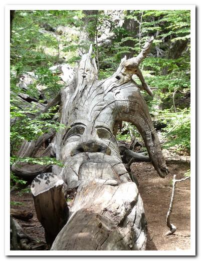 Sculptured tree in El Bosque Tallado