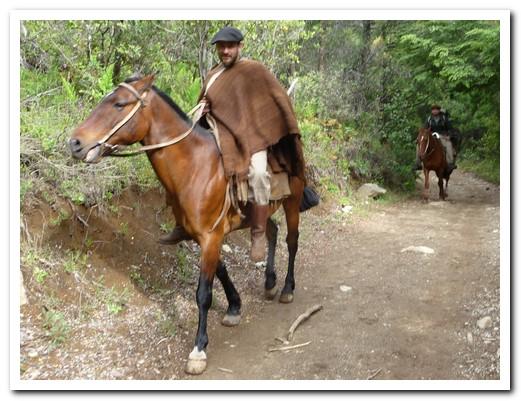 Gaucho on the path