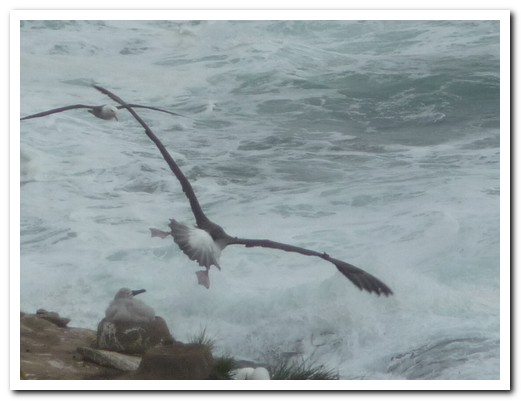 Albatross - landing gear down