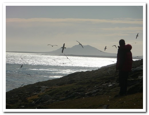 Albatross taking advantage of the strong winds to soar