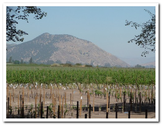 Grapes for the best wines are grown here