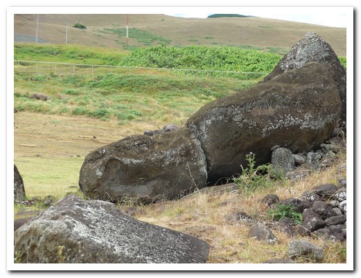All the Moai were destroyed in the 19th centuary, not all have been restored
