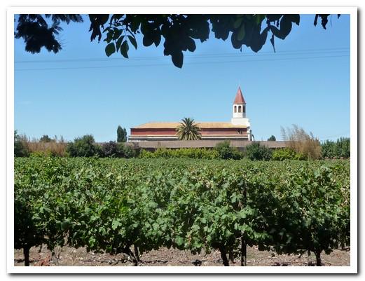 Viña Balduzzi in San Javier (Maule Valley)