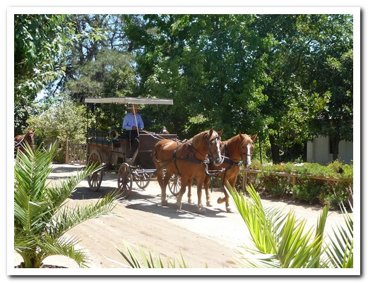 Viña Viu Manent offers horse drawn carriage tours