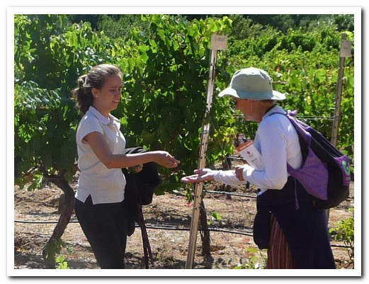 Tasting the grapes in the vineyard before moving on to the wines