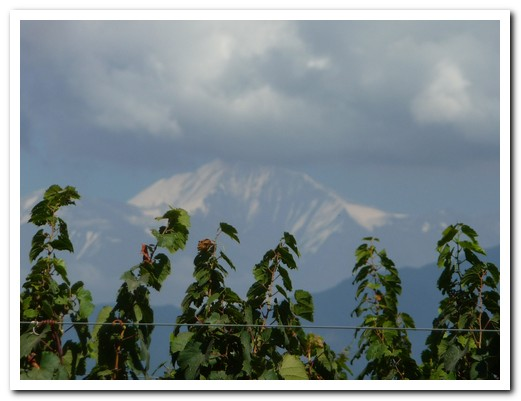 Ancongagua through the grape vines