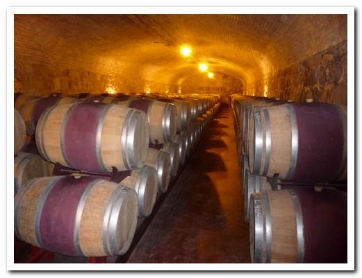 The cellar at Viña Alta Vista (Luján)