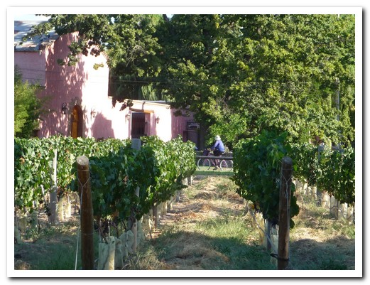 A nice way to get around the vineyards