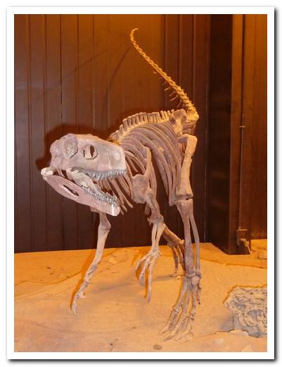 Worlds oldest dinosaur fossil