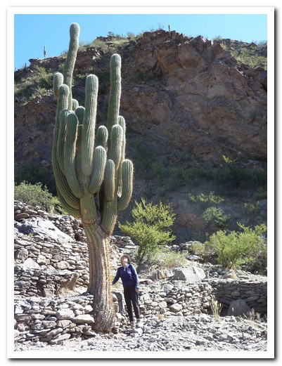 Cactus over 6 metres tall