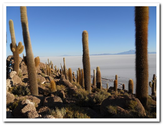 The coral island is covered in cactus