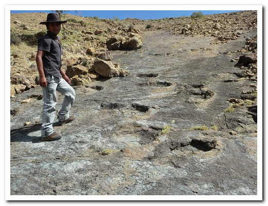 Rubén, our guide, shows us more dinosaur footprints