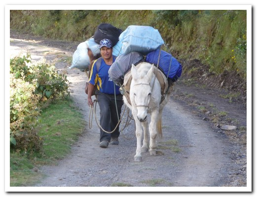 Don Vicente and his mules carried our equipment and food