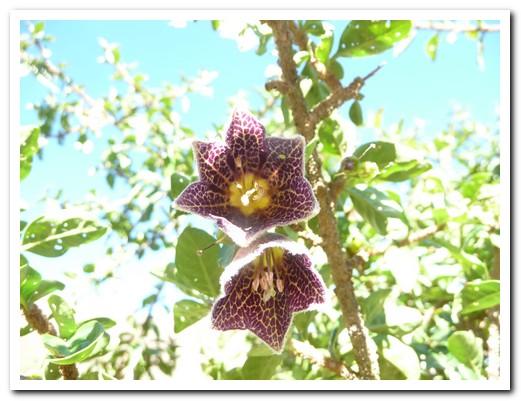 Beautiful high altitude flowers