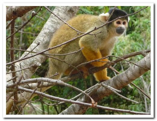 One of the many monkeys