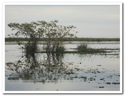 Floating islands of aquatic plants support trees