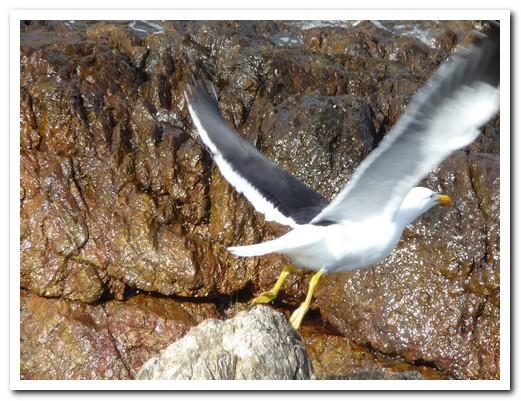 At least the sea gulls enjoy the wind
